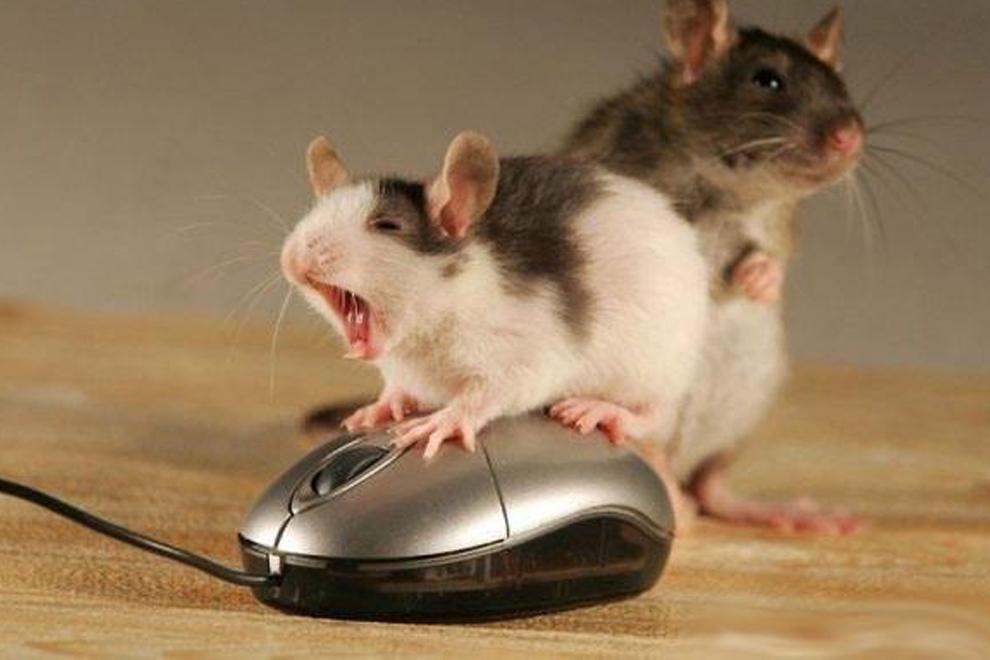 Мыши фото 2