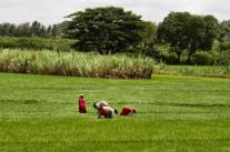 Les femmes, clés de la lutte contre la faim