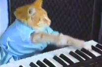 Le petit chat au piano est mort