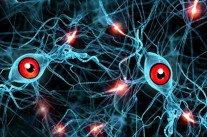 Vidéo trois neurones