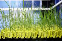 Le Conseil d'État ratiboise Monsanto