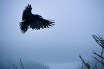 Vol noir de corbeaux sur l'Open Data français